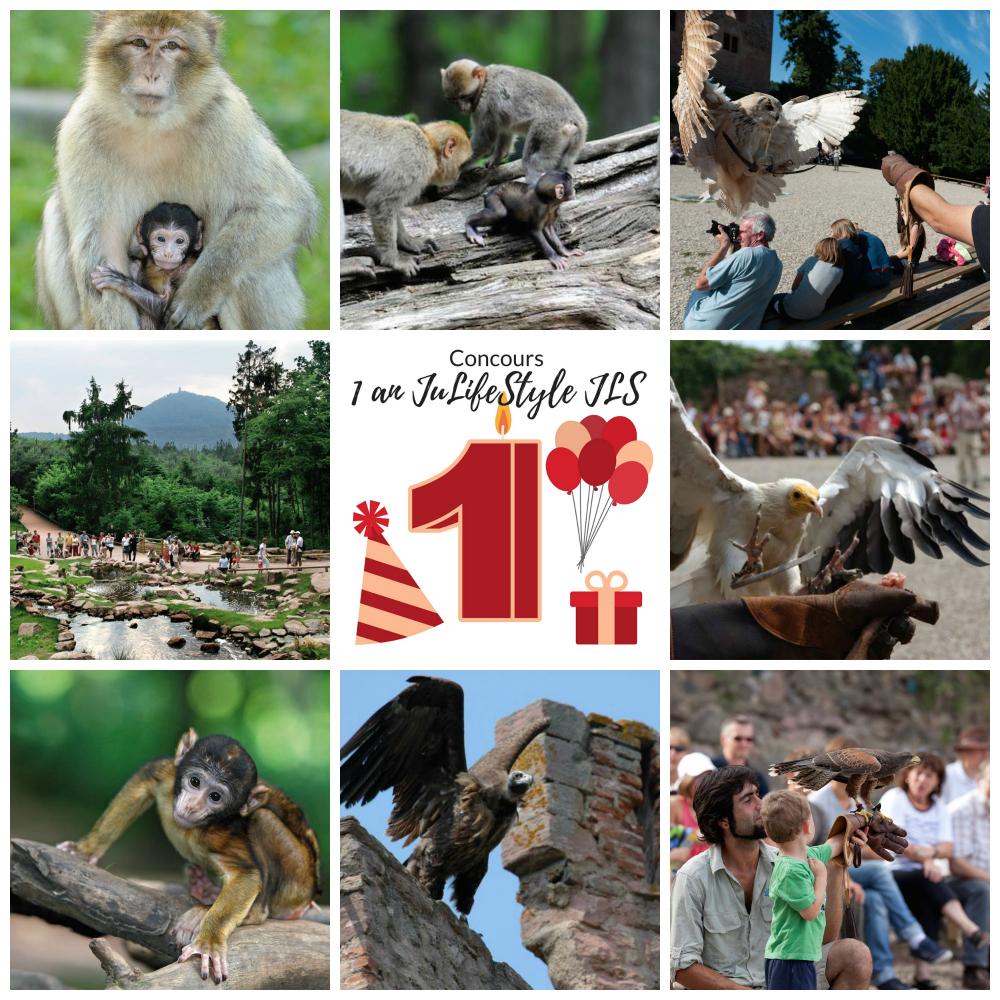 Anniversaire du blog JuLifeStyle JLS - Crédit photo : la Montagne des Singes et la Volerie des Aigles